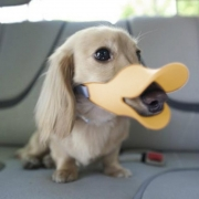 Soft Cozy Silicone Yellow Duckbill Duck Mouth Anti Biting Barking Pet Dog Adjustable Safety Mask Cage Muzzle