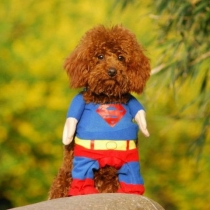 Pet by Couture - Superhero Costume Superman